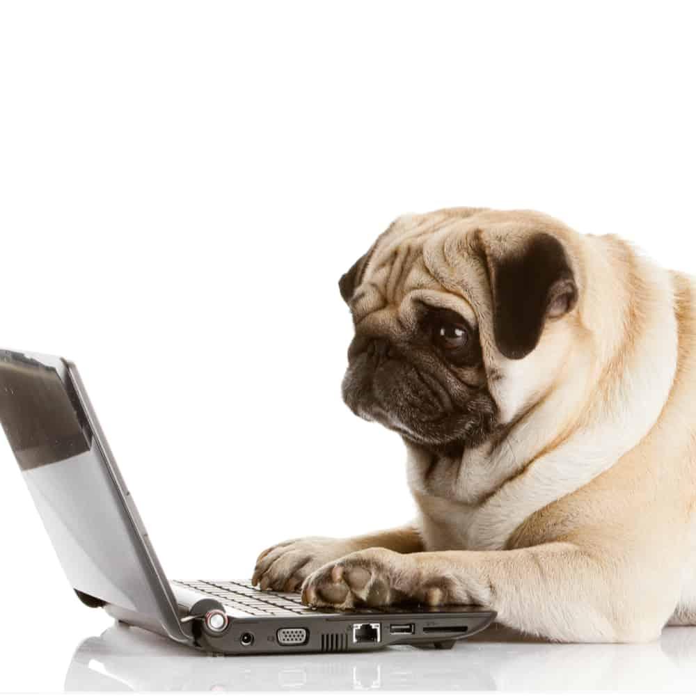 éducation canin en ligne